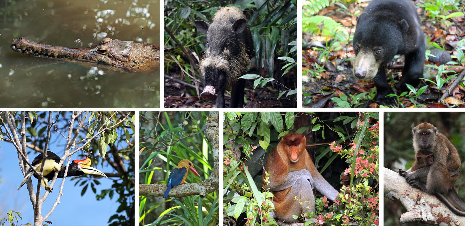 Tanjung Puting - Diversity of Species