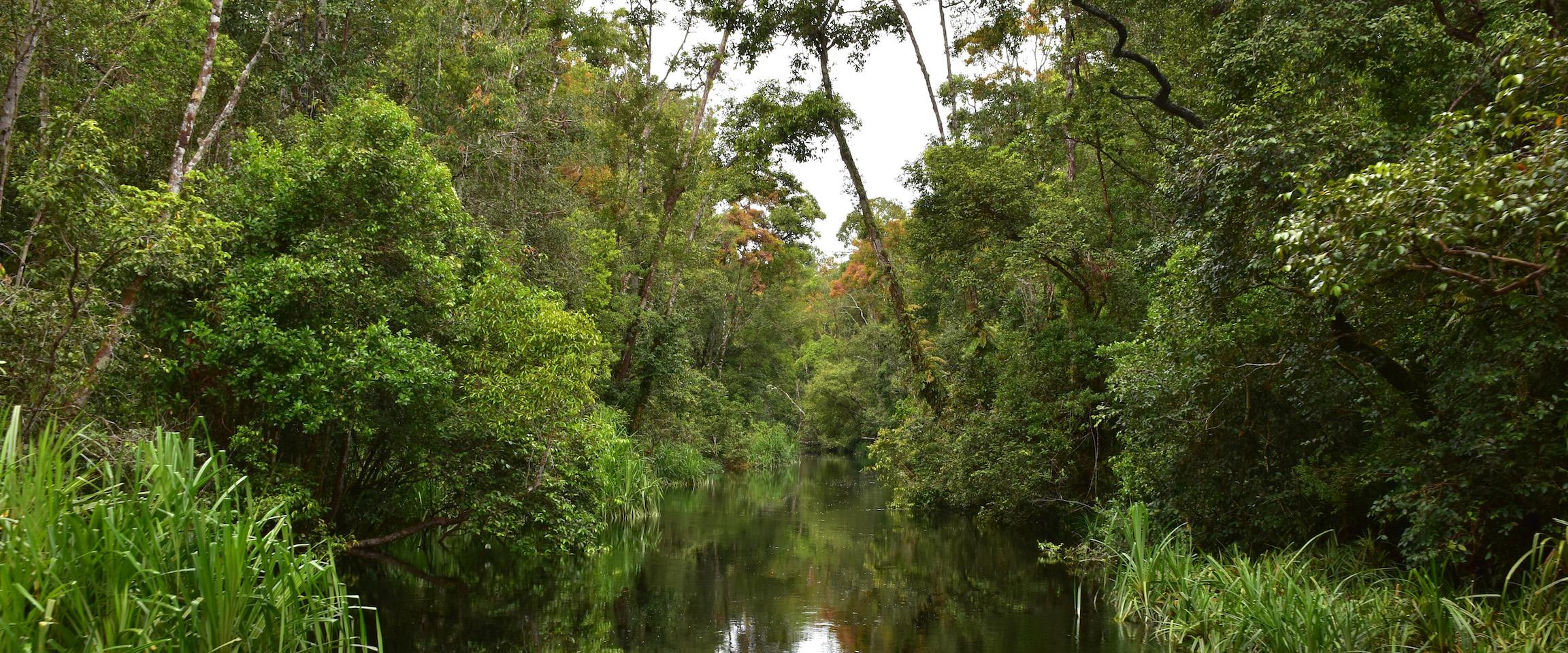 Tanjung Puting Rainforest