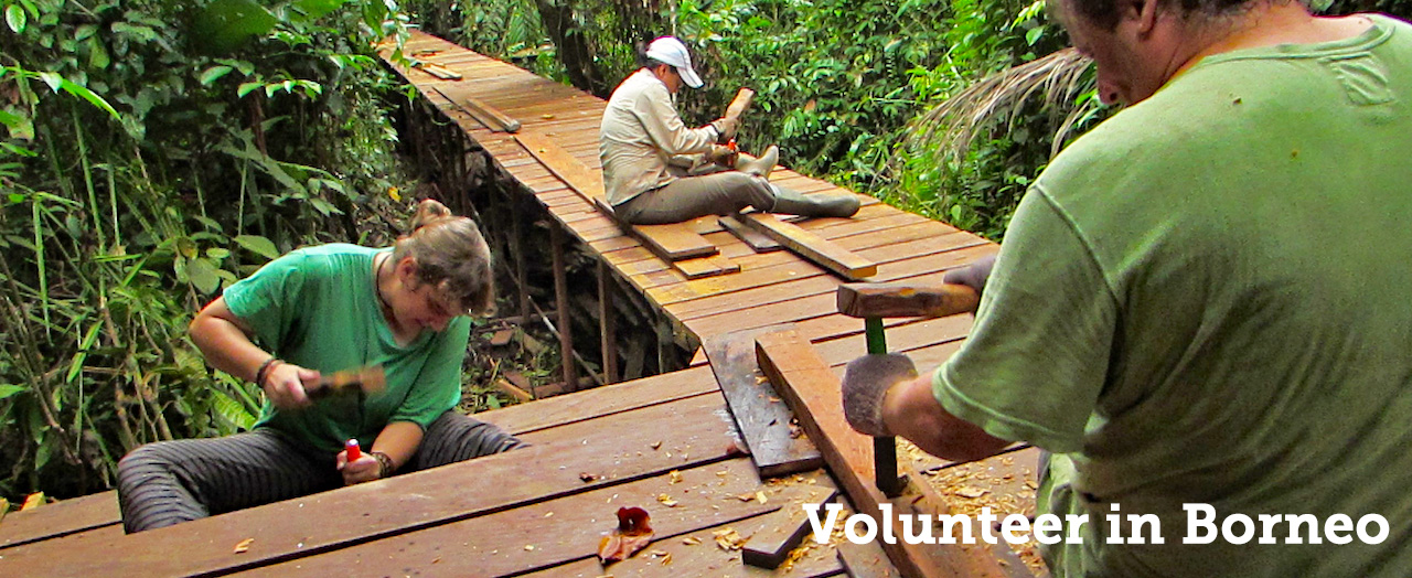 Volunteer in Borneo