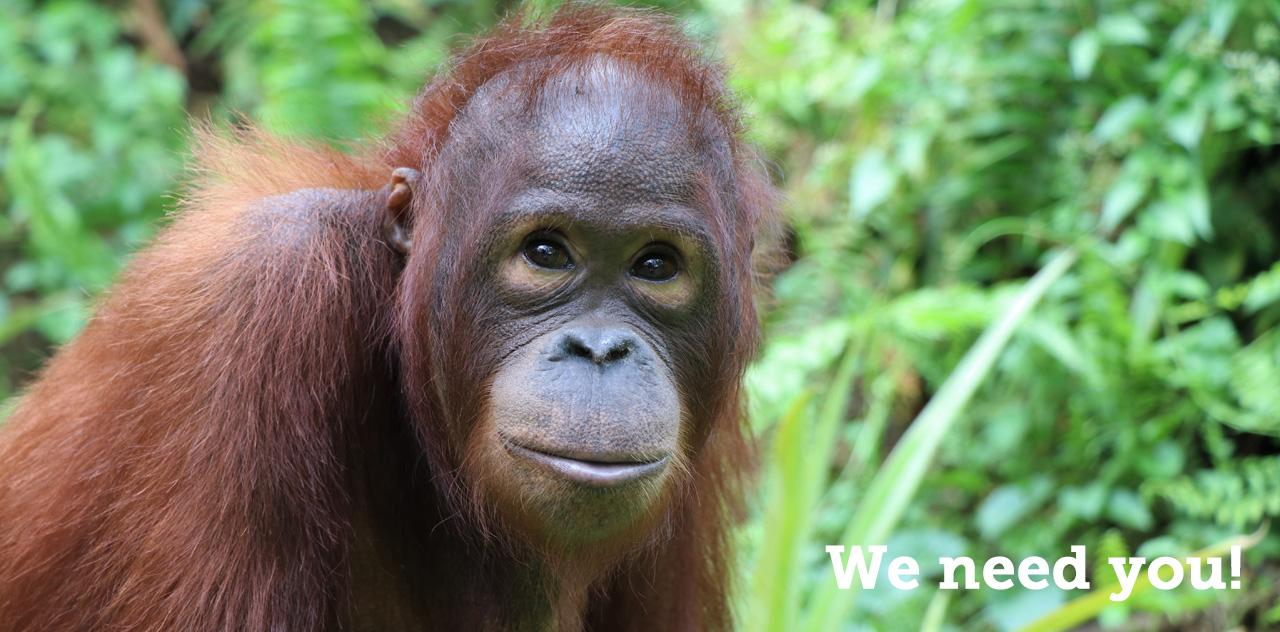 Volunteer With Us - We Need You