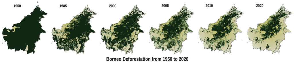 Borneo Deforestation 1950 thru 2020