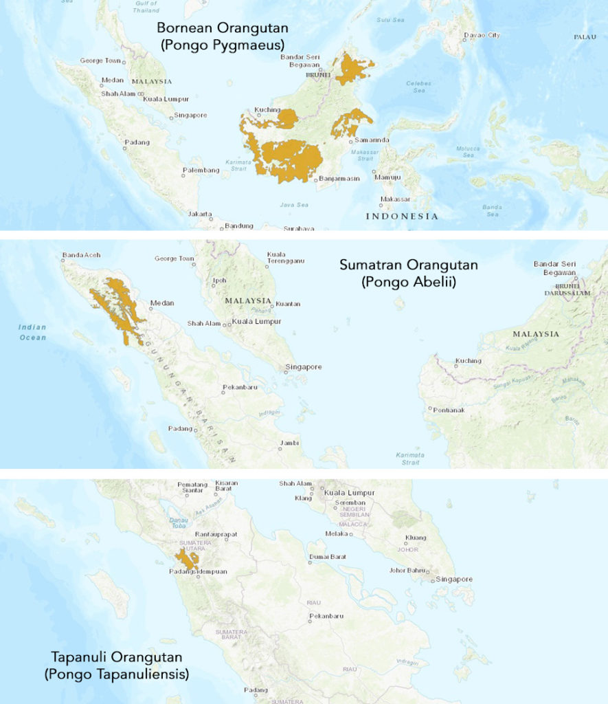 Orangutan Ecology - Species Dispersal