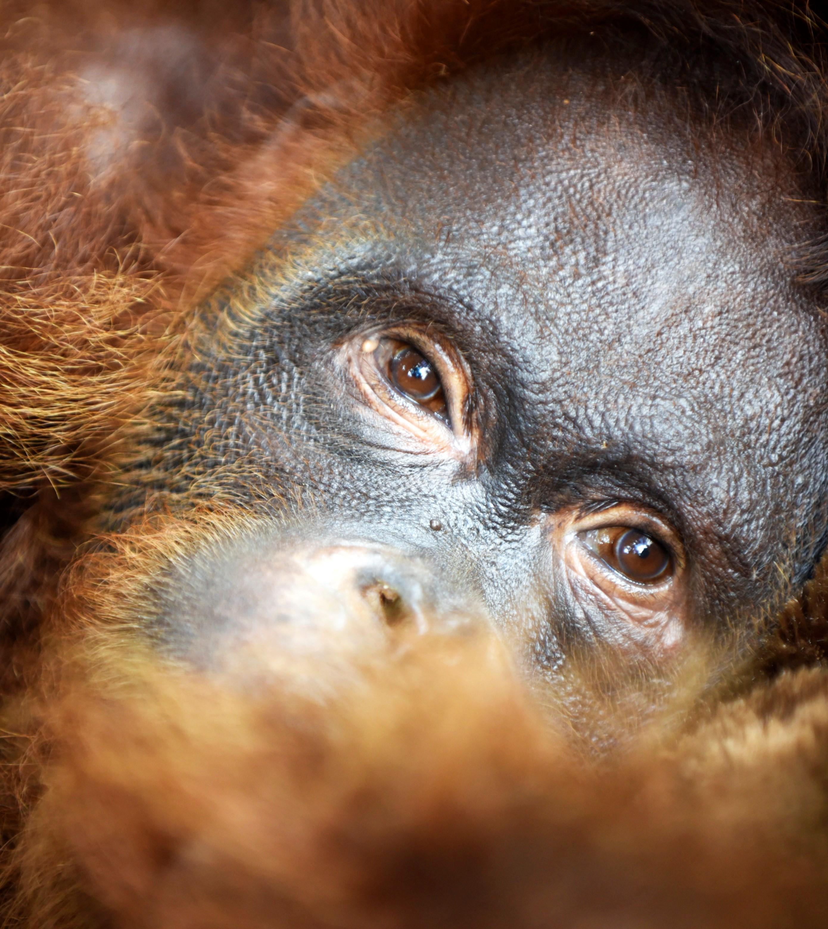 August 2019 - Hockey - Orangutan Foundation International