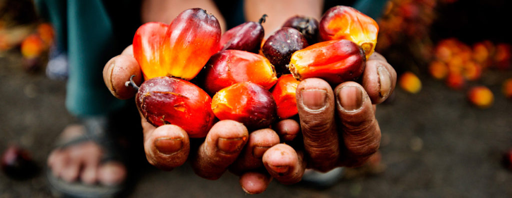 Palm Oil Kernels-Farmers Hands
