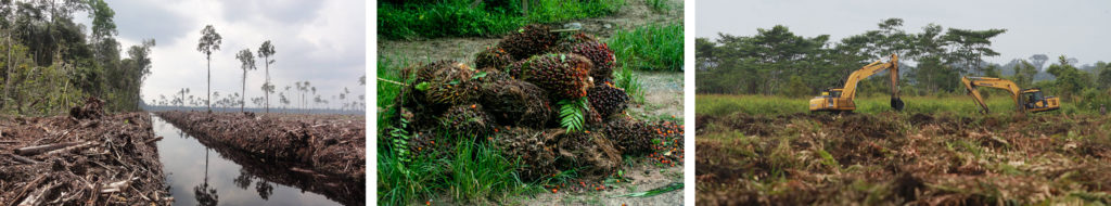 Palm oil - environmental impact