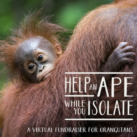 Help and Ape_Post